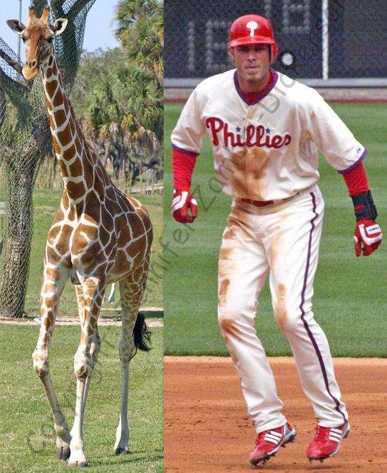 Werth Giraffe cr.jpg