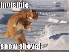 funny-pictures-cat-with-invisible-snow-shovel.jpg