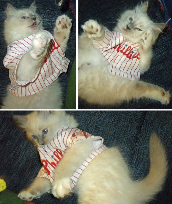 Chase kitten.jpg