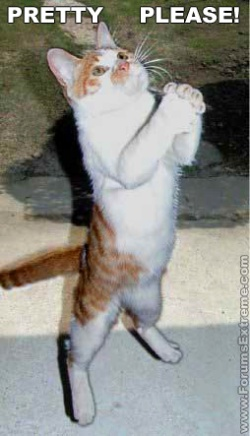 begging cat.jpg