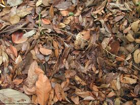 dead_leaves_221706.jpg